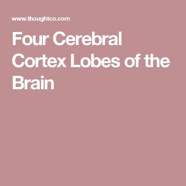 The Four Cerebral Cortex Lobes of the Brain | Cerebral ...