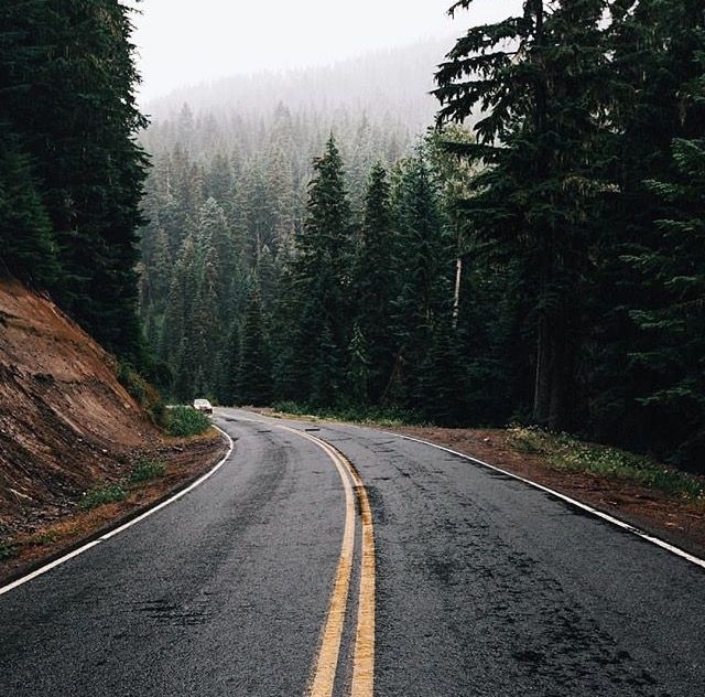 The Best Forest Road Tumblr Pics