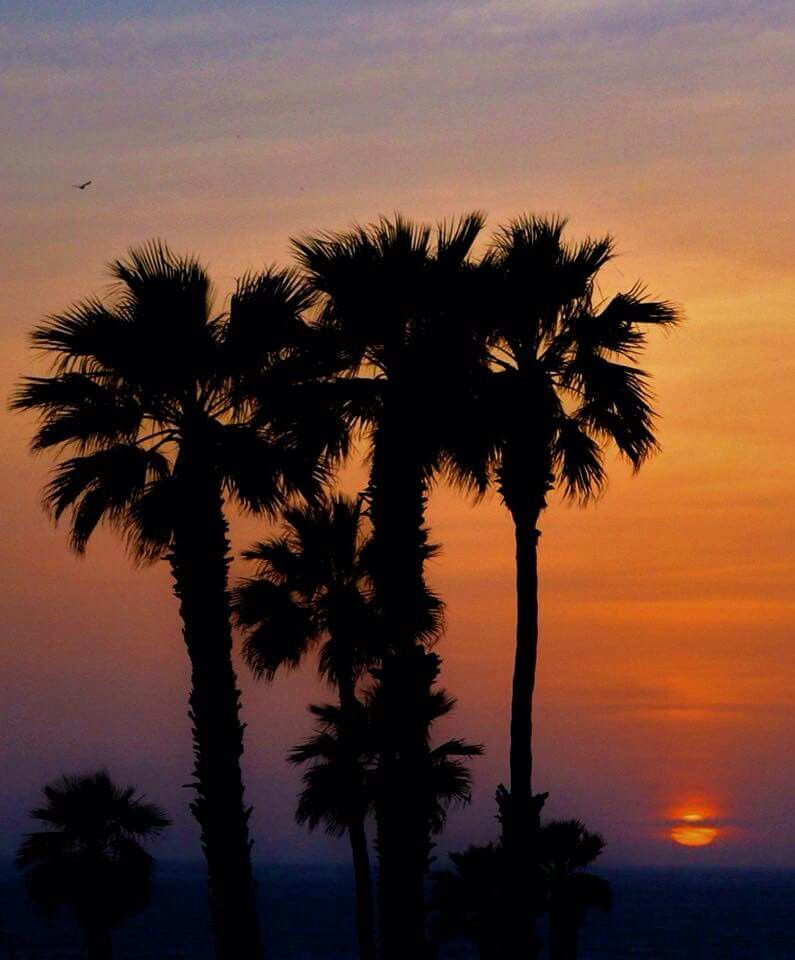 Palm trees and a Ventura Sunset