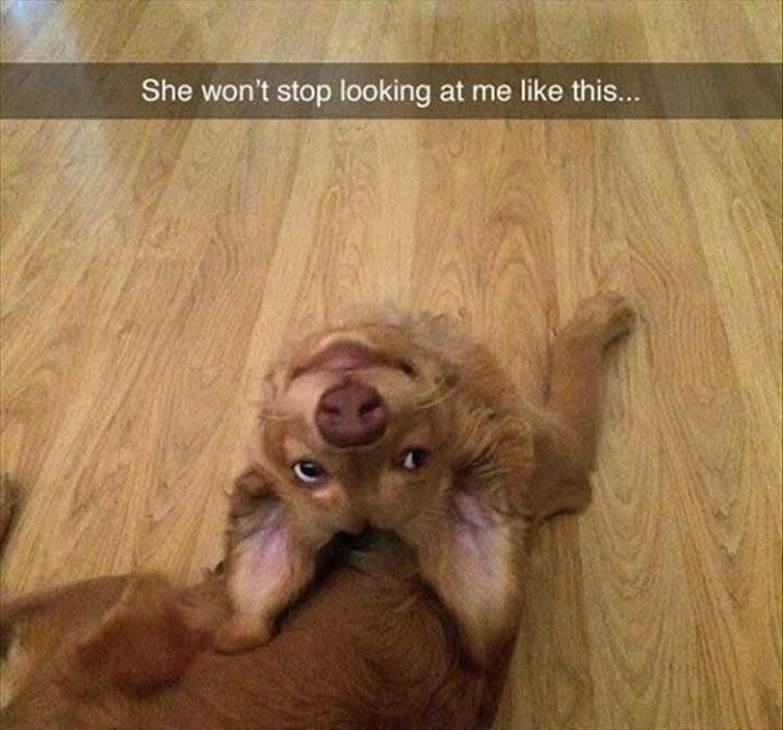 Pictures of the Day – Top 50 Funny Internet Dog Memes