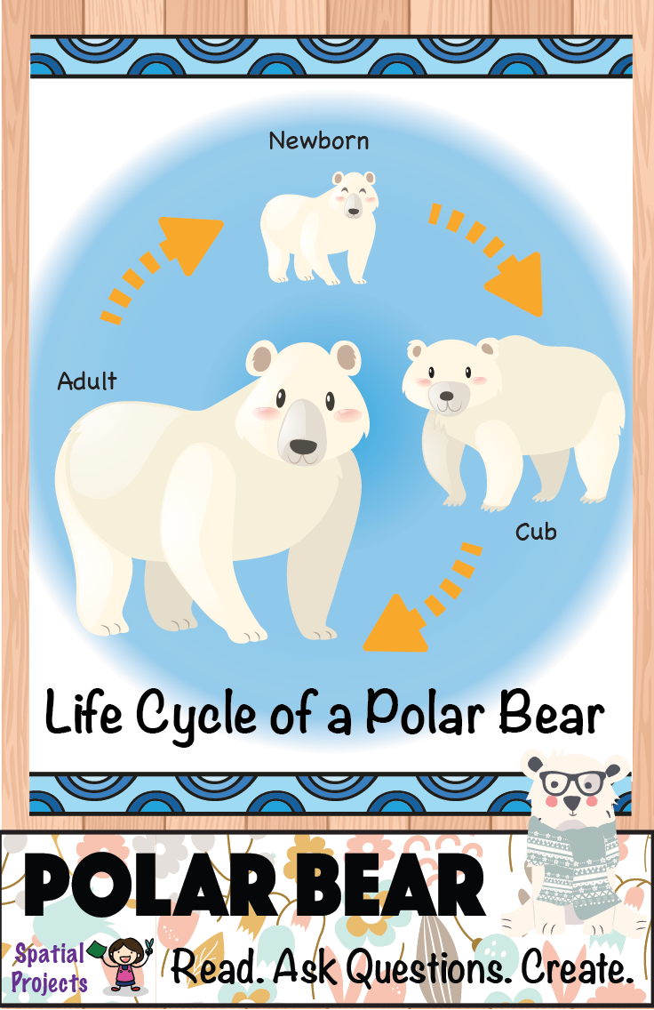 All About Polar Bears Nonfiction Unit Polar Bear Arctic Animals Activities Arctic Animals [ 1136 x 736 Pixel ]