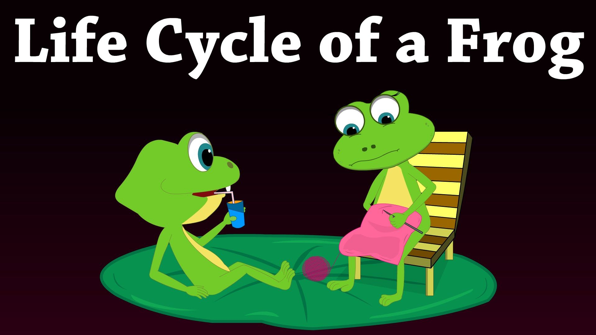 You Will Learn About Life Cycle Of A Frog In This Video