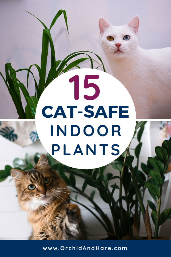 15 Easy Care Cat Safe Plants 2020 In 2020 Zimmerpflanzen