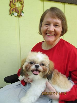 This Is Eaton S 3rd Glory Ridge Shih Tzu Named Heidi She Is 5 Months Here And Weighs Little Over 5 Lbs Shih Tzu Therapy Dogs Animal Companions