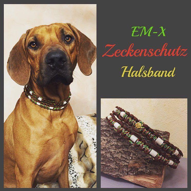 Em X Keramik Zeckenschutz Halsband Im Afrikanischen Stil Emkeramik Zeckenhalsband Paracord Rhodesianridgeback Rr Rhodesian Lockscreen