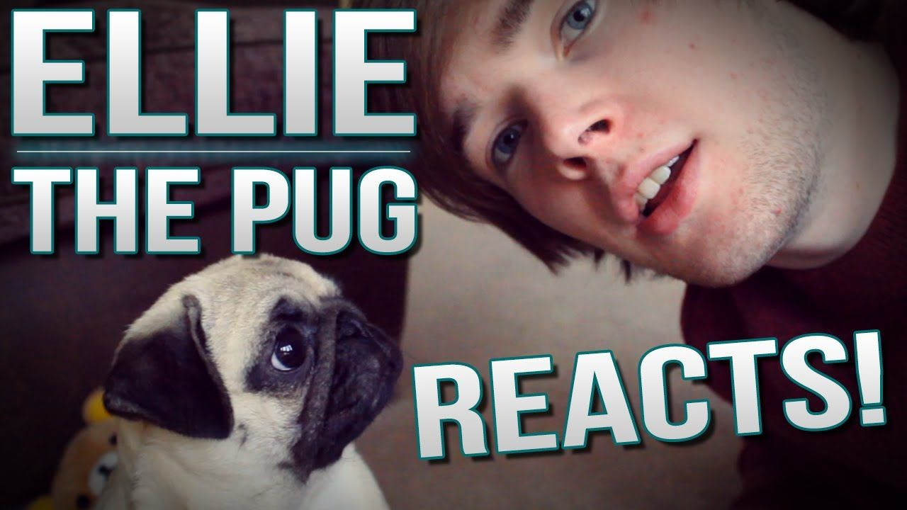 Ellie The Pug Reacts Tdm Vlogs Episode 26 My Dr Who Sons