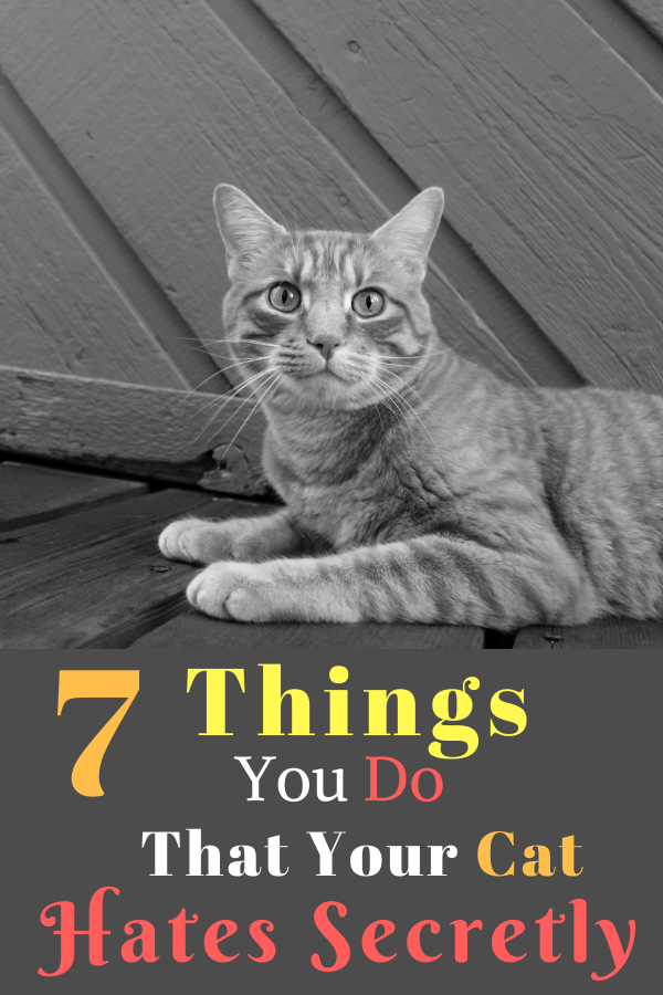 7 Things You Do That Your Cat Hates Secretly Cats, Cat