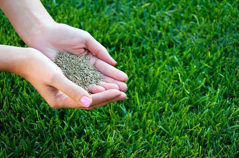 How to Start Lawn From Seed Planting grass, Best grass