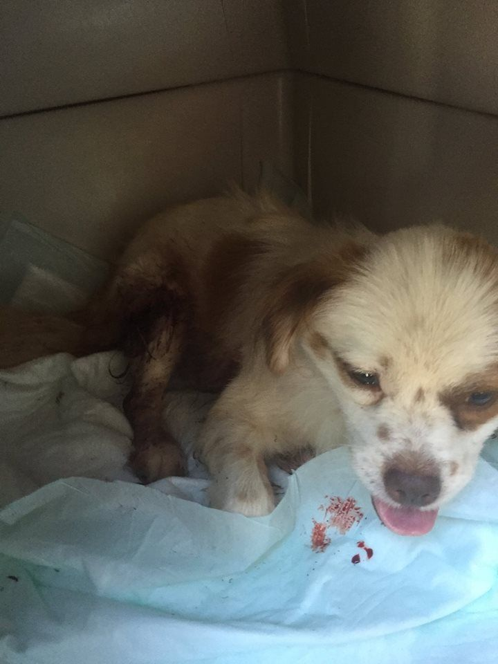 This 12 pound pup was shot after he wandered into the