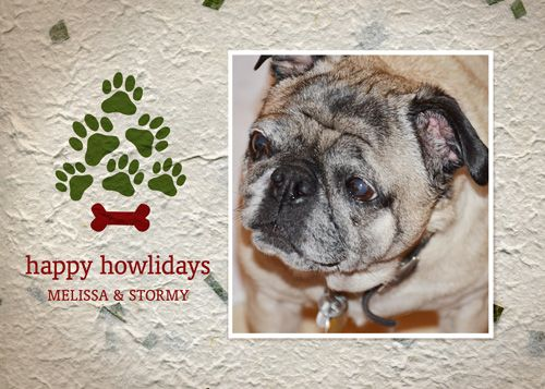Dog Themed Photo Christmas Cards Send A Too Cute Pet Holiday Card