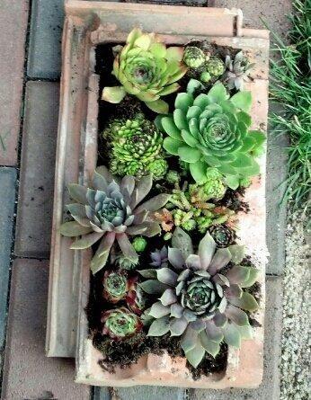 Sukkulenten In Korkstopsel Anlegen Eine Tolle Deko Idee , Alte Dachziegel Als Gartendeko Nutzen Garten