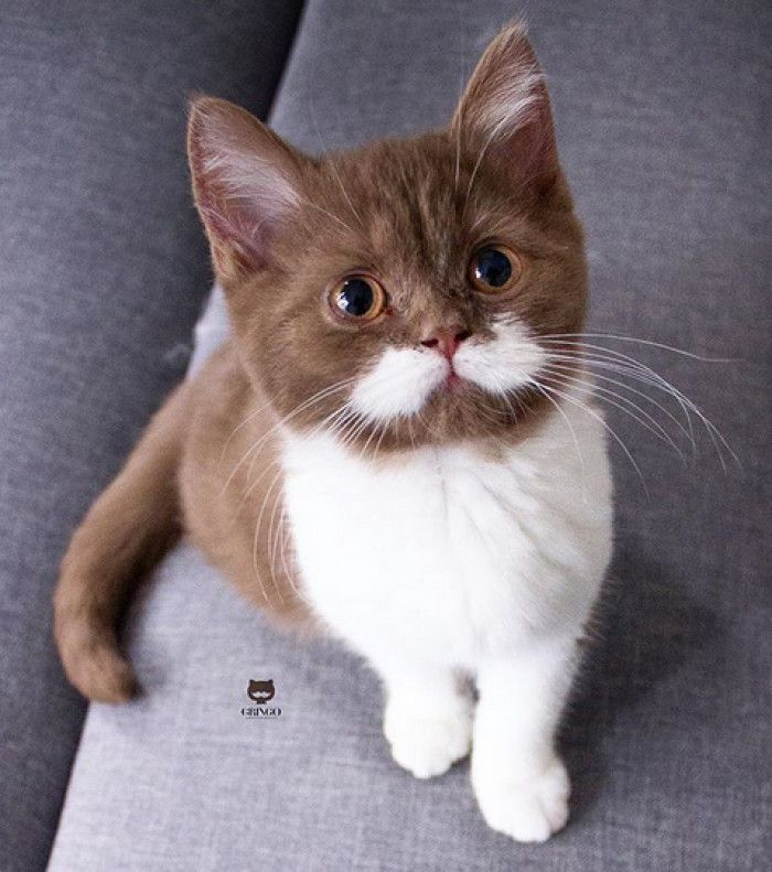 This Adorable Cat's Moustache Is Taking Over The Internet - Cats On Catnip