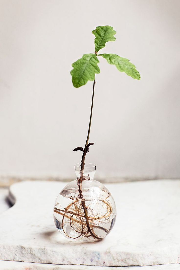 Rooting Plants In Water Is The Easiest Way To Bring 400 x 300
