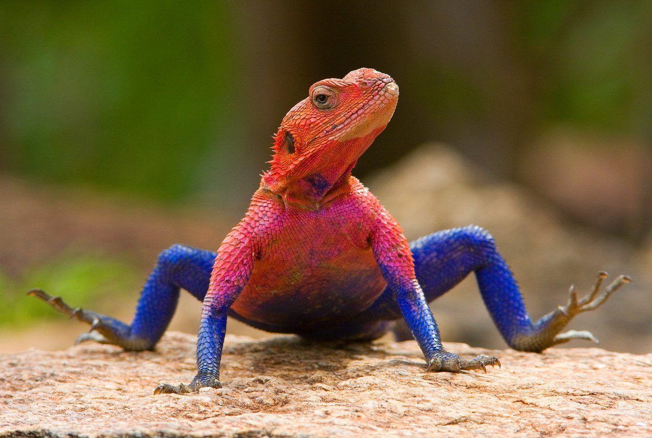 Lagarto Spiderman. you look really nice!