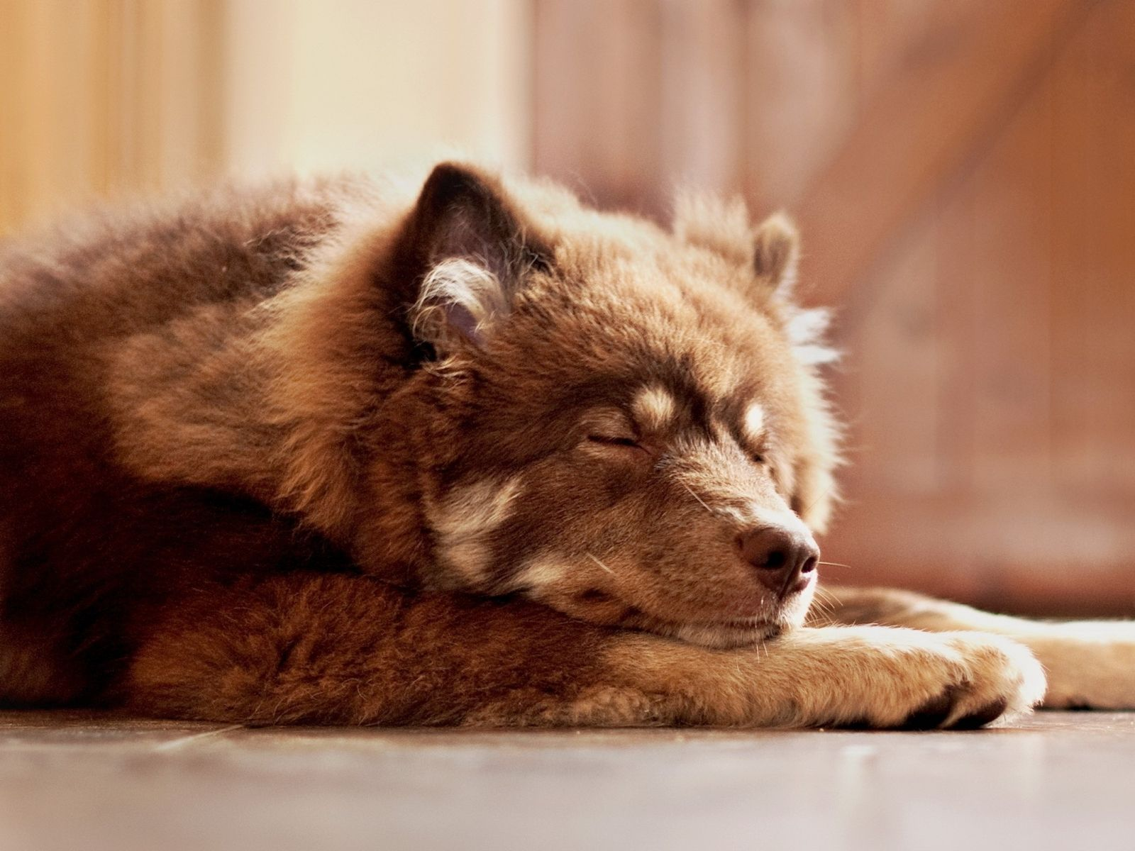 Image For Dog Wallpaper Cute Beautiful Face Lovely Playful Sleeping