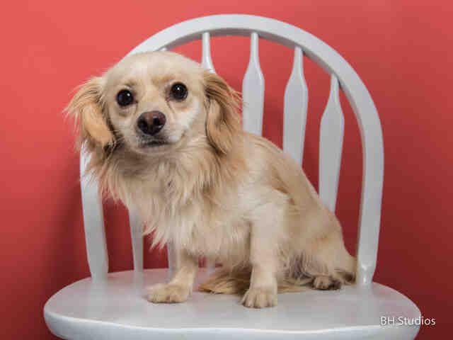 Shotzie Houston Texas Petharbor Com Animal Shelter Adopt A