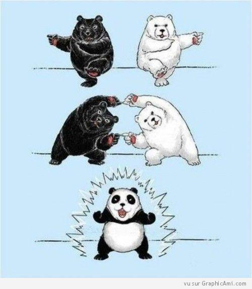 """Résultat de recherche d'images pour """"le panda un ours???"""""""