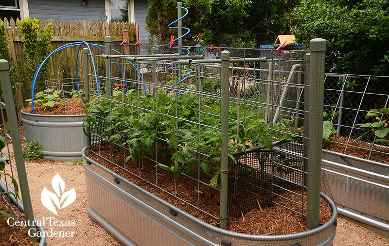 Blog central texas gardener netting secured to tubs with
