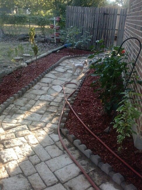 Nueva presentacion de mi jardin