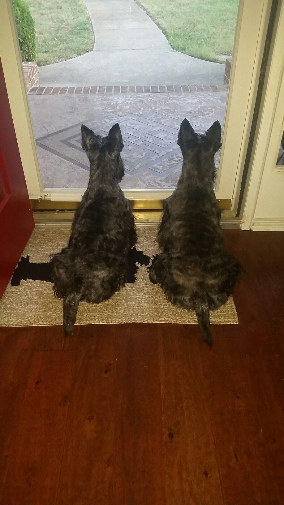 Neighborhood watch!!