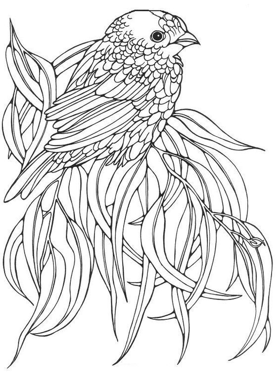 Omeletozeu | Bird coloring pages, Coloring pages, Coloring ...