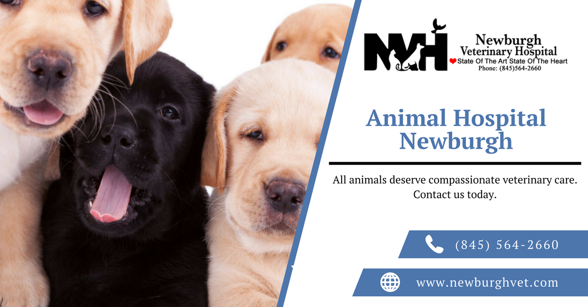 Newburgh Veterinary Hospital Offers A Variety Of Veterinary Services For Your Pets Our Professional And Experience Animal Hospital Veterinary Hospital Pet Vet