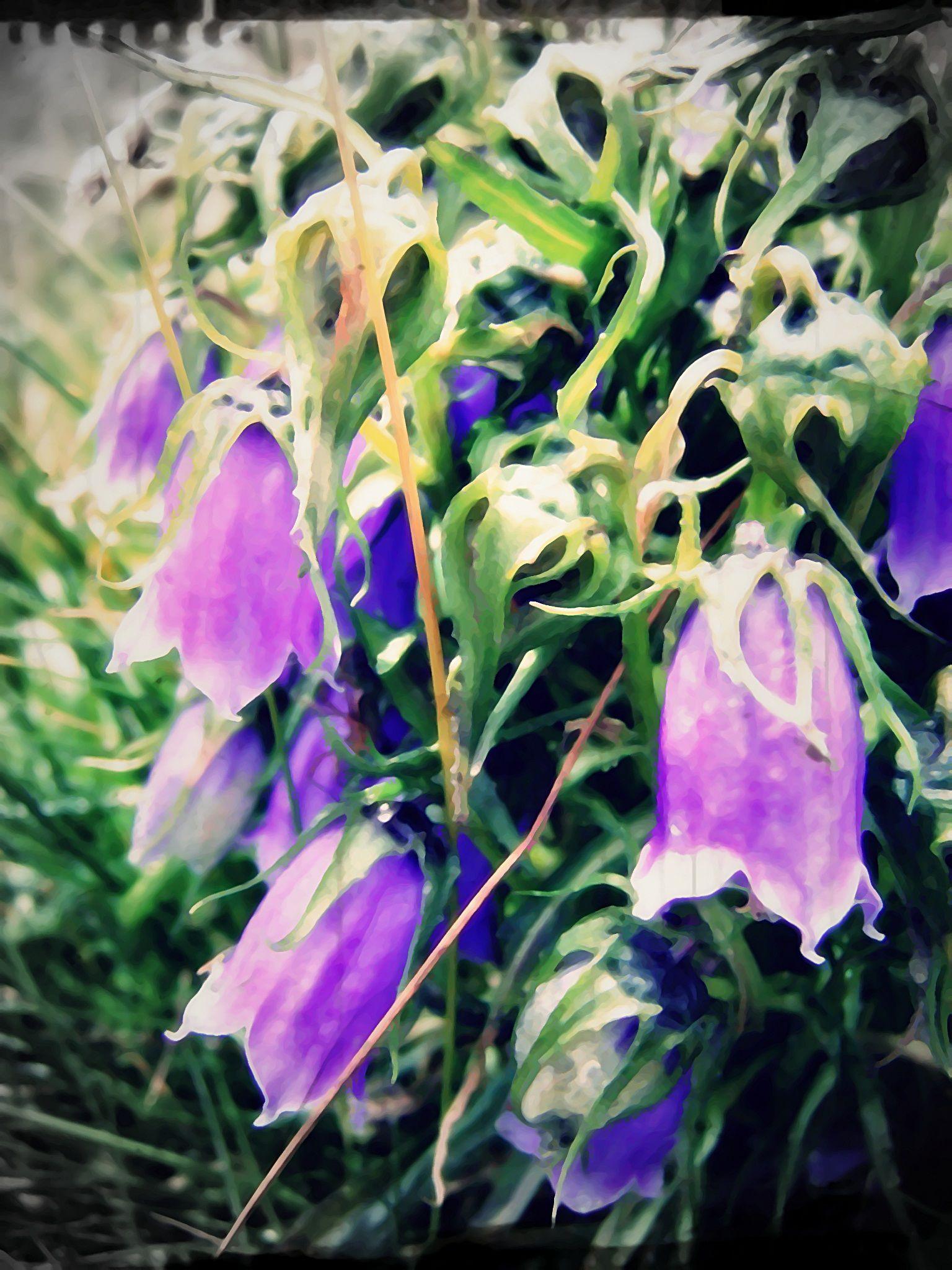 flora of the Tatra mountains