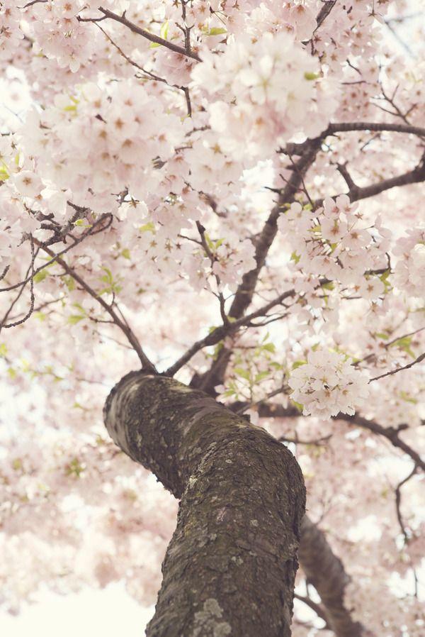 Sanctuary By Catherine Mcdonald On Artfully Walls Blossom Trees Cherry Blossom Pastel Wall Art