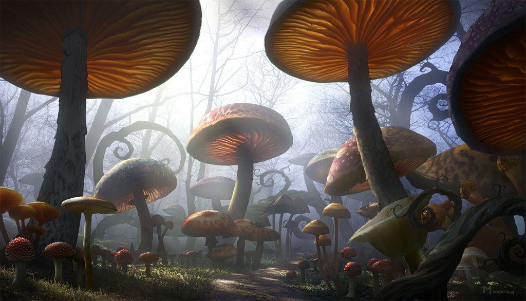 Gallery For Gt Alice In Wonderland Background Mushrooms Alice