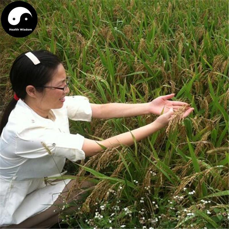 Buy Red Rice Seeds 150pcs Plant Grain Oryza Sativa For Food Paddy