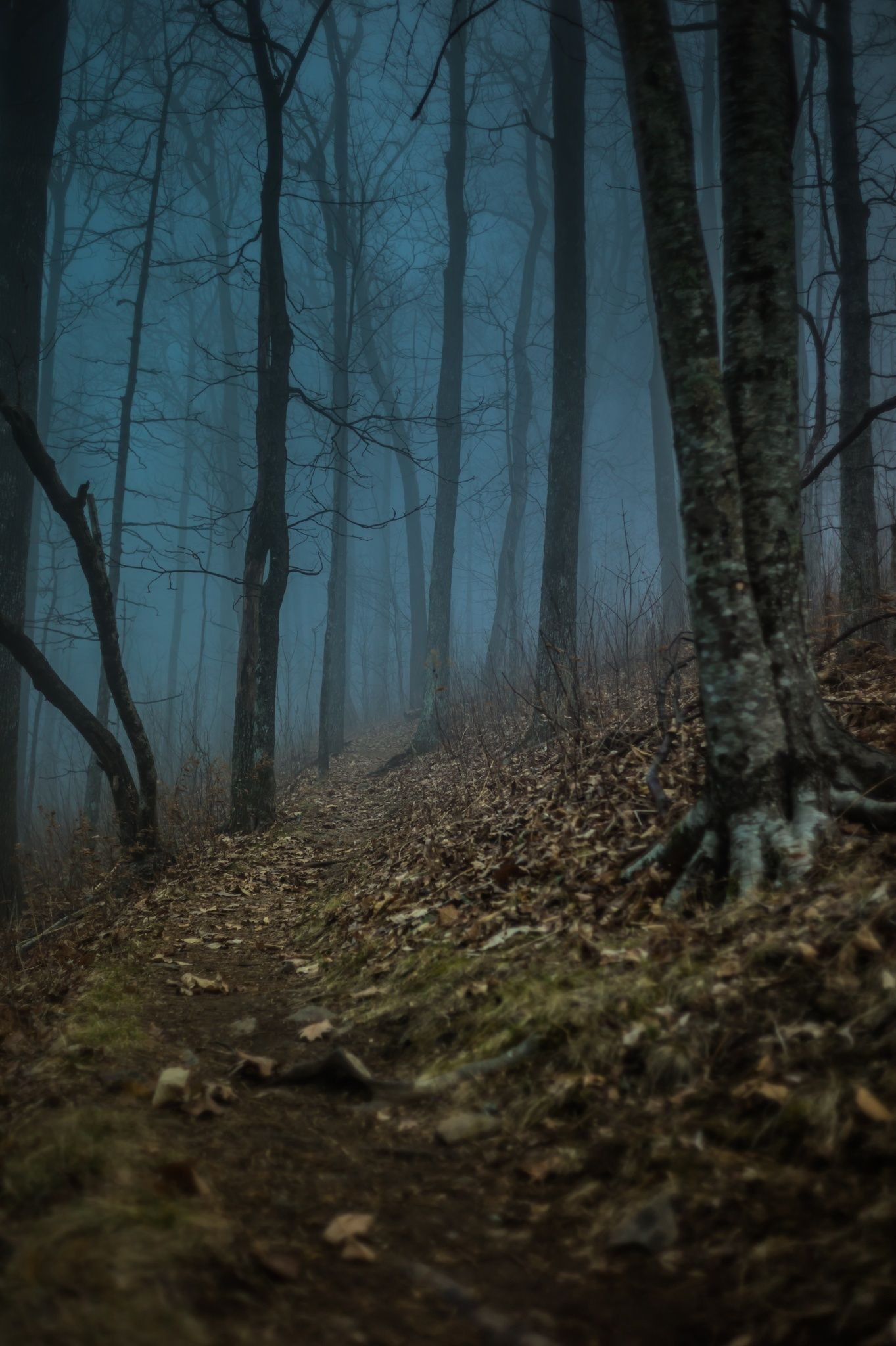 Pale blue twilight creeps into my vision, and I can smell the scent of withered leaves as they merge with the dampened earth.