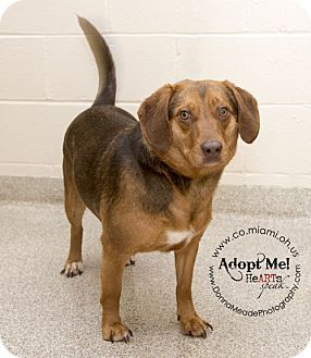 Very Urgent Longest Shelter Resident I Am At A Kill Shelter In