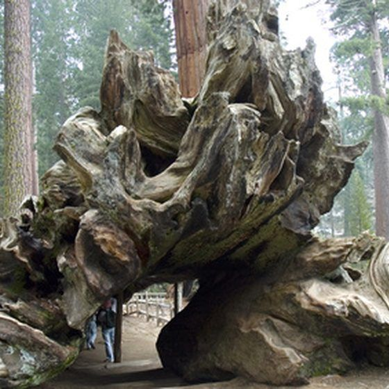 How To Plan A Trip To Redwood National Park In 2019
