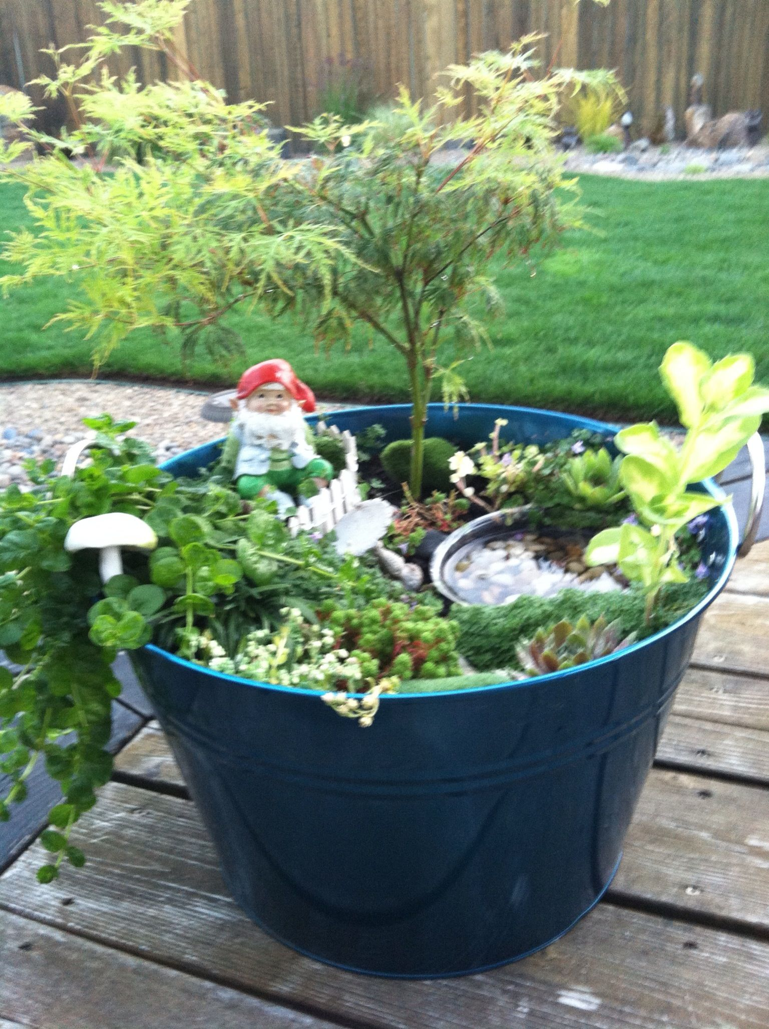 Real Gnomes: Gnome Garden With Real Oak Tree