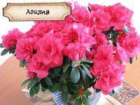 Домашние цветущие цветы фото и названия