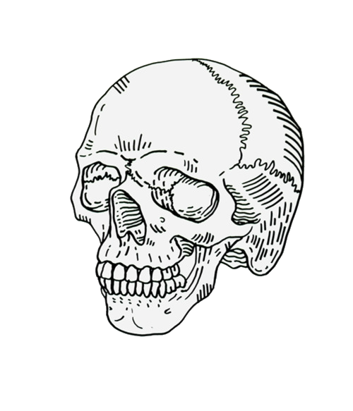 Simplicity Of Dannytyler Skull Sketch Skull Art Skull Illustration