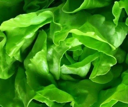 Salad Collection: Useful Properties of Lettuce Leaves.
