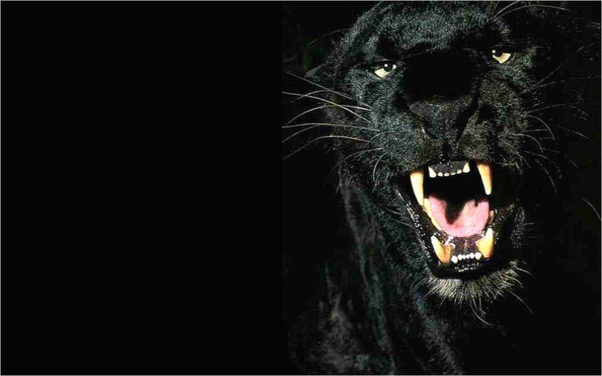 Black Panther Wallpaper 4k Animal Black Wallpaper Black Panther Panther