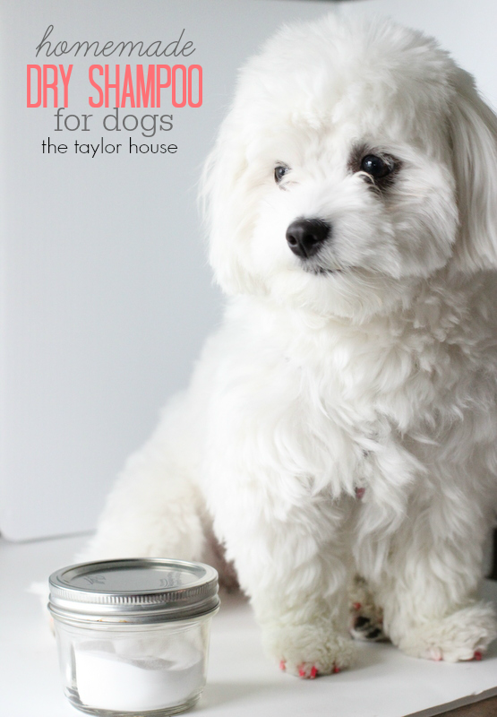 Loving My Pet Diy Dry Shampoo For Dogs The Taylor House Diy Dry Shampoo Dry Dog Shampoo Diy Stuffed Animals