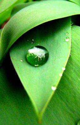Perle de pluie photo macro de gouttes d 39 eau nature pinterest photos - Chauffe eau qui goutte ...