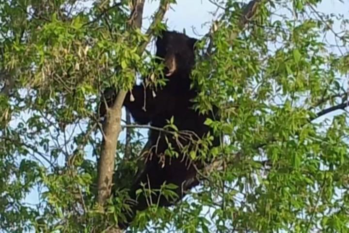 Staying Safe Around Bears In Northern Michigan Northern Michigan Michigan Charlevoix