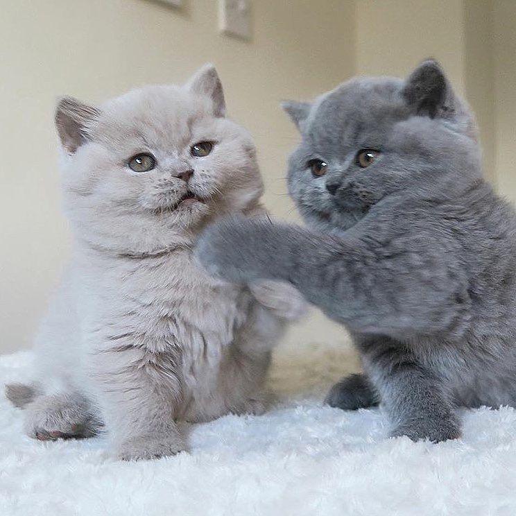 Cat-Care Tips