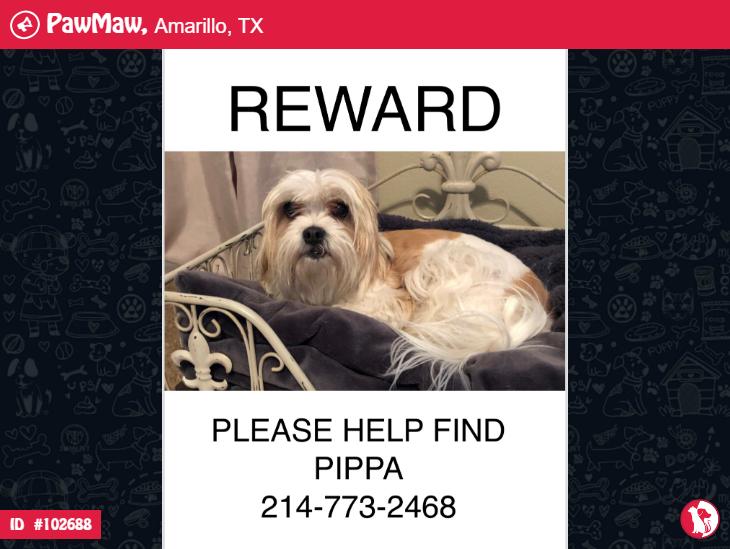 Help Pippa Is Lost With Images Losing A Pet Pippa Shitzu
