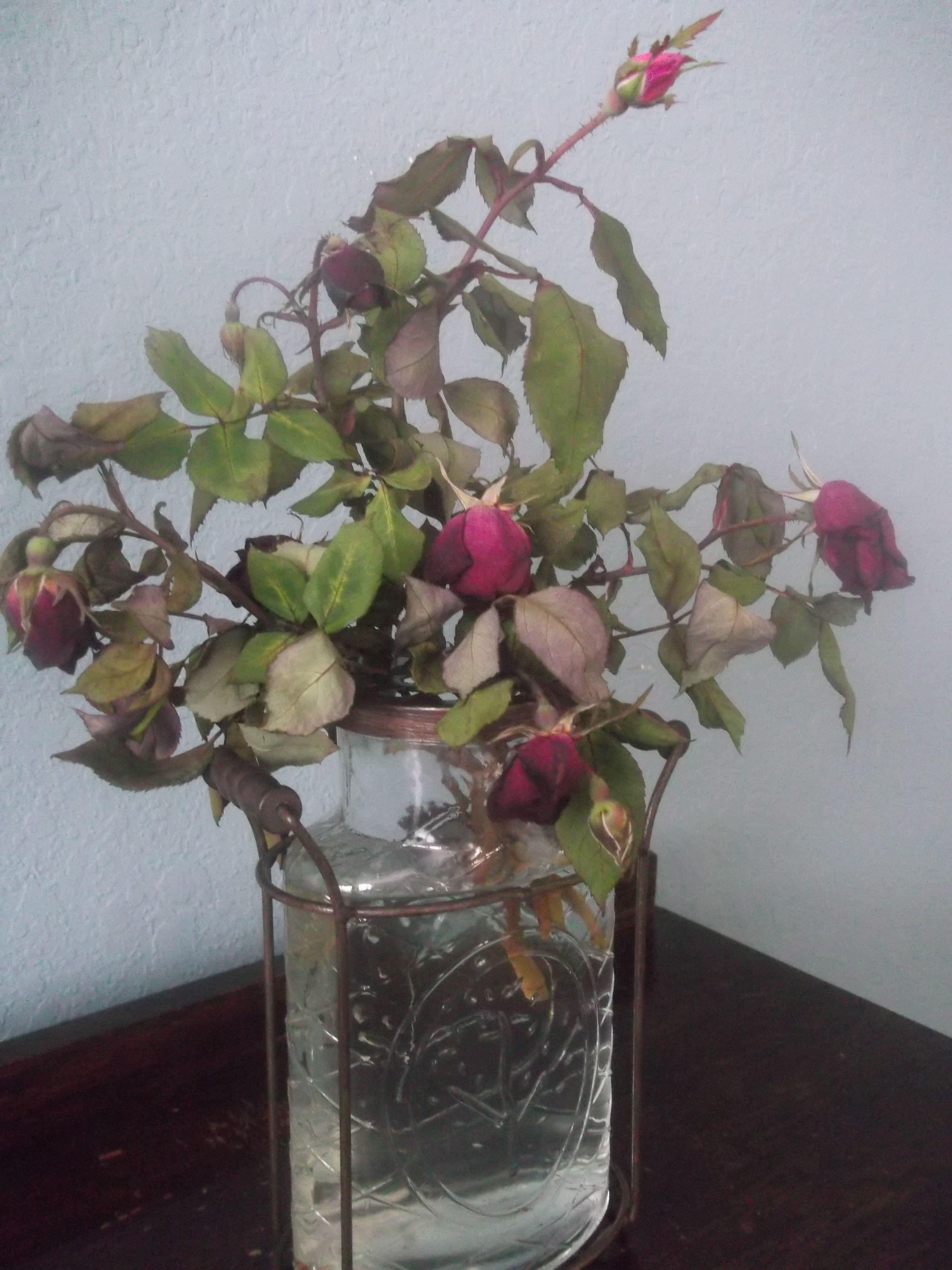 Diy Flower Preservative Diy Flowers How To Preserve Flowers Flowers