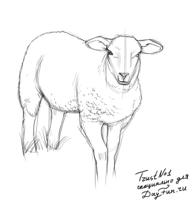 how to draw a sheep step by step arcmelcom