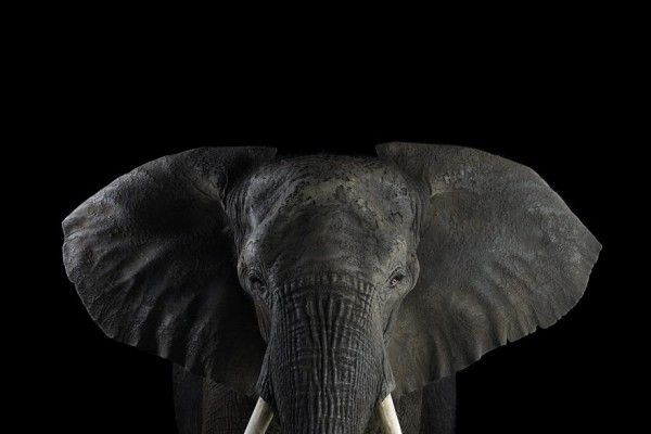 brad wilson's animal photography is ahmaazzing