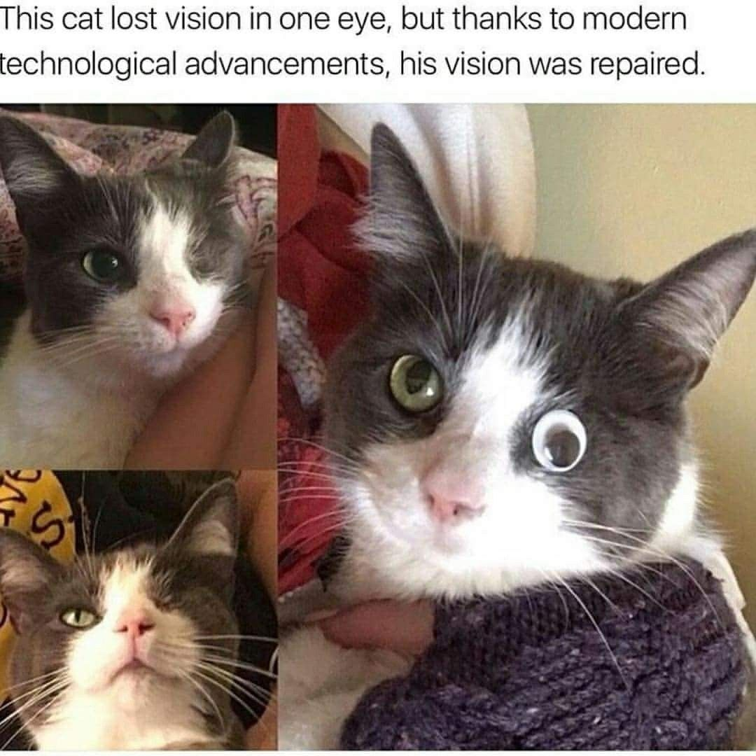 why cats are good for you