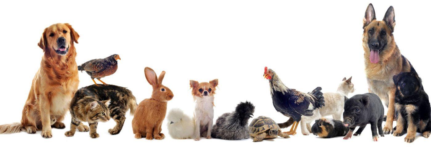 Estos son los alimentos más tóxicos para tus mascotas explicados en inteligentes infográficos