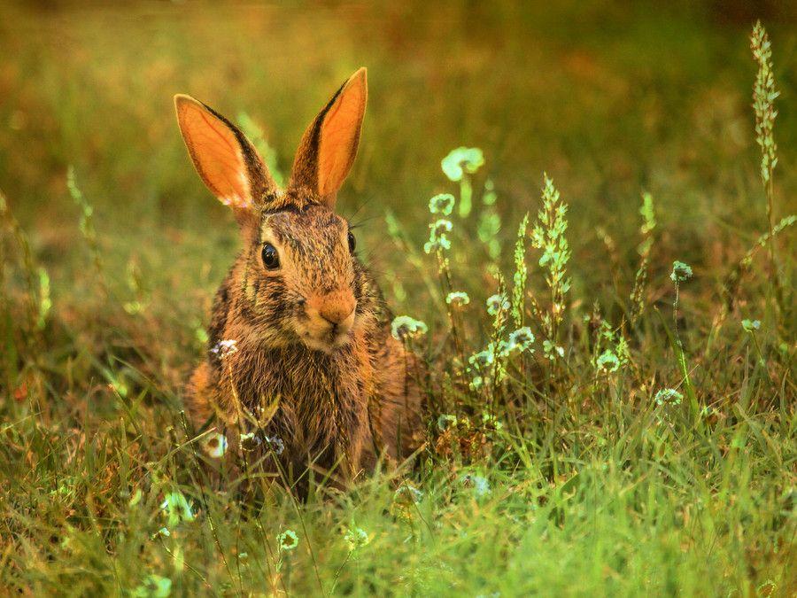 Rabbit by Vitor Santos on 500px