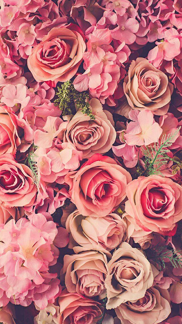 fond ecran rose